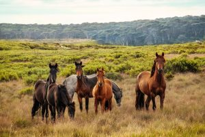 Det är något speciellt med hästar
